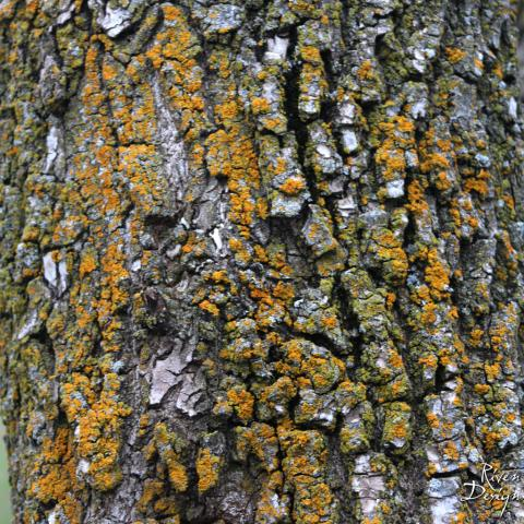 Tree Bark Three iPad image